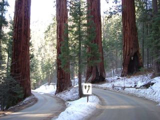 Redwoods road